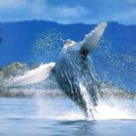 Samana whale watching tours
